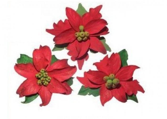 Stella Di Natale Secca.Decorazioni Natalizie Stella Di Natale